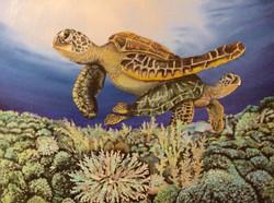 Sea Turtle Reef