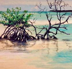 Mangrove Warm Friends