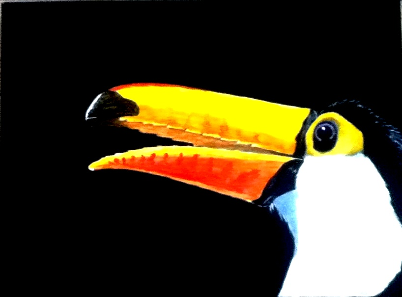Toucan's View