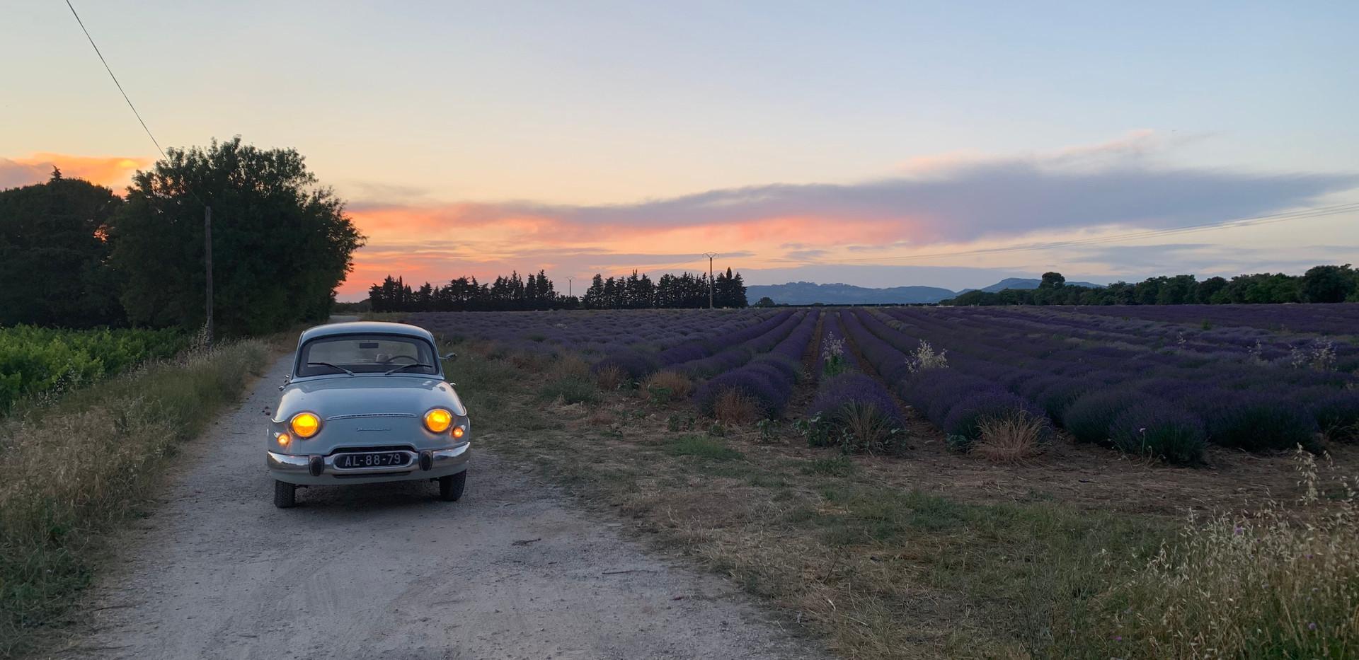Lavender field behind the Mas Saint-Gens