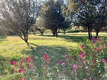 Le parc du Mas Saint-Gens, grand gite Provence Carpentras