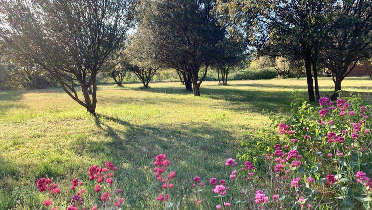 The park of Mas Saint-Gens