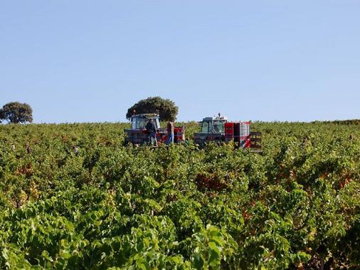 The vineyards all around Mas Saint-Gens