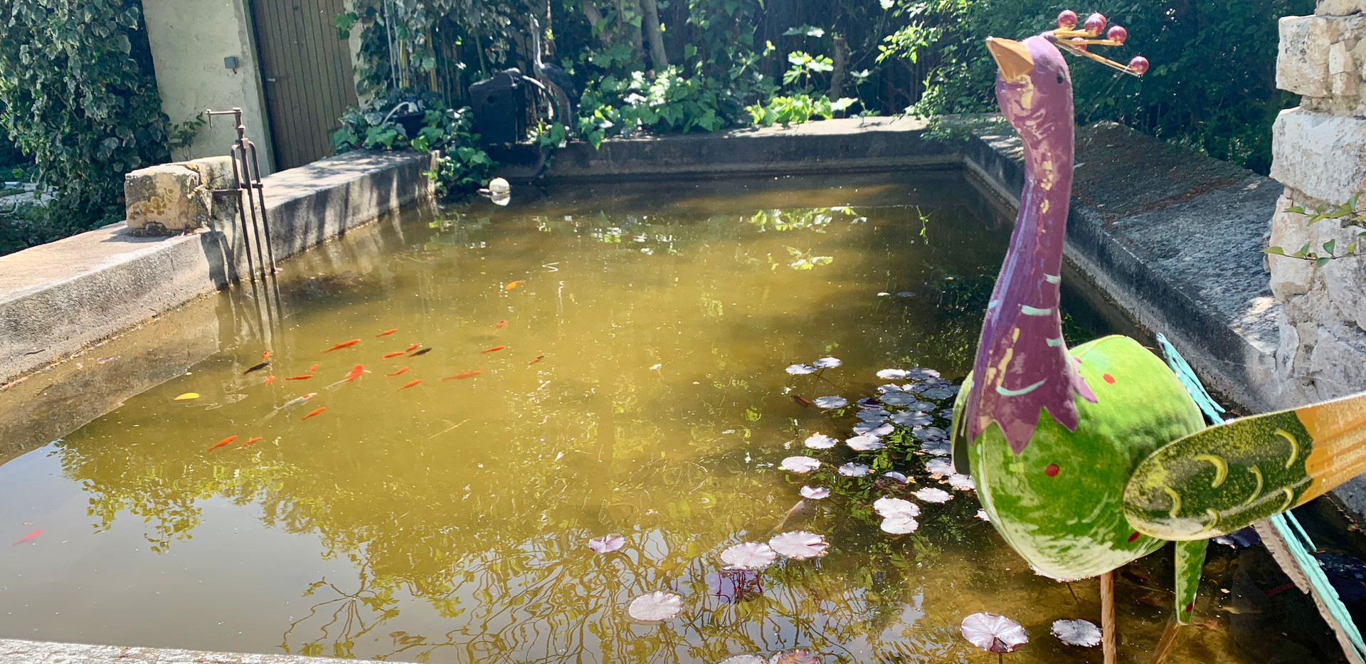 The goldfish pond, Mas Saint-Gens, Luberon Ventoux