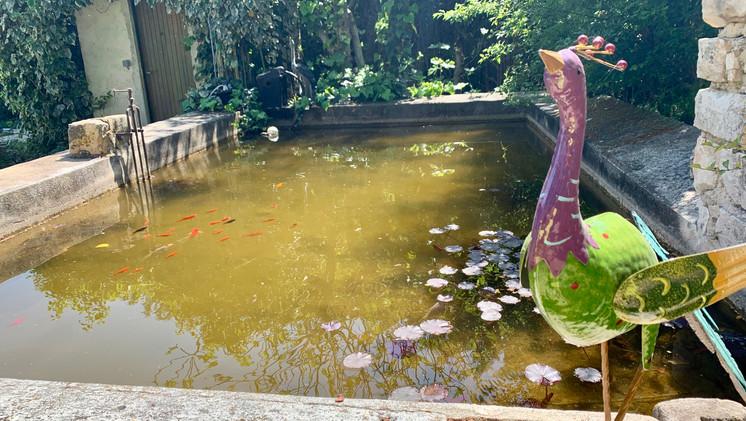 Le bassin aux poissons rouges, Mas Saint-Gens