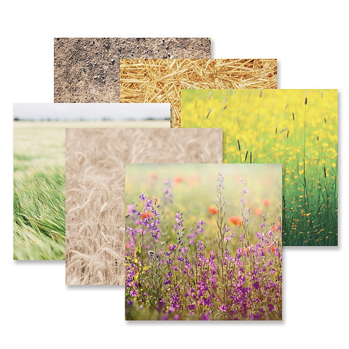 Mellow Meadows Paper Pack (12pk)