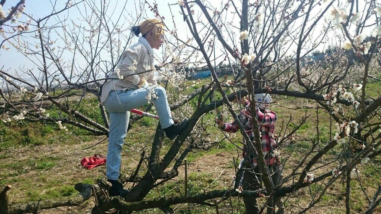 木に登ってたくましく作業する様子