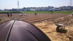 オーガニックパパ畑での作業風景2