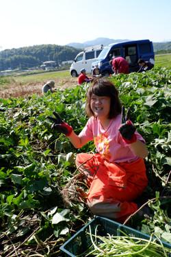 オーガニック野菜の収穫