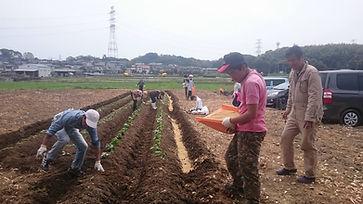 オーガニックパパ農作業風景