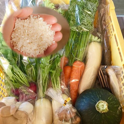 オーガニックパパおまかせ野菜とお米のパック
