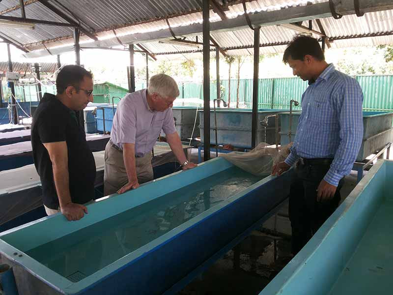 Mahseer Trust Chair, Ian Pett visits the hatchery at ICAR-DCFR