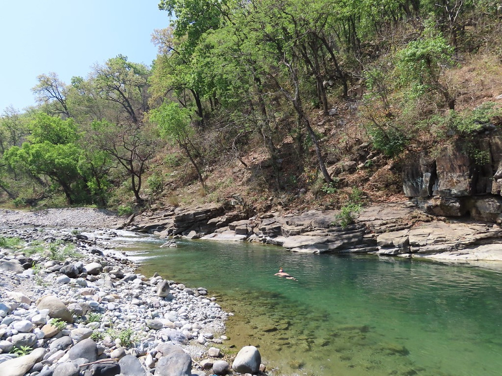 Adrian snorkels in ideal adult mahseer habitat, but fails to see any fish