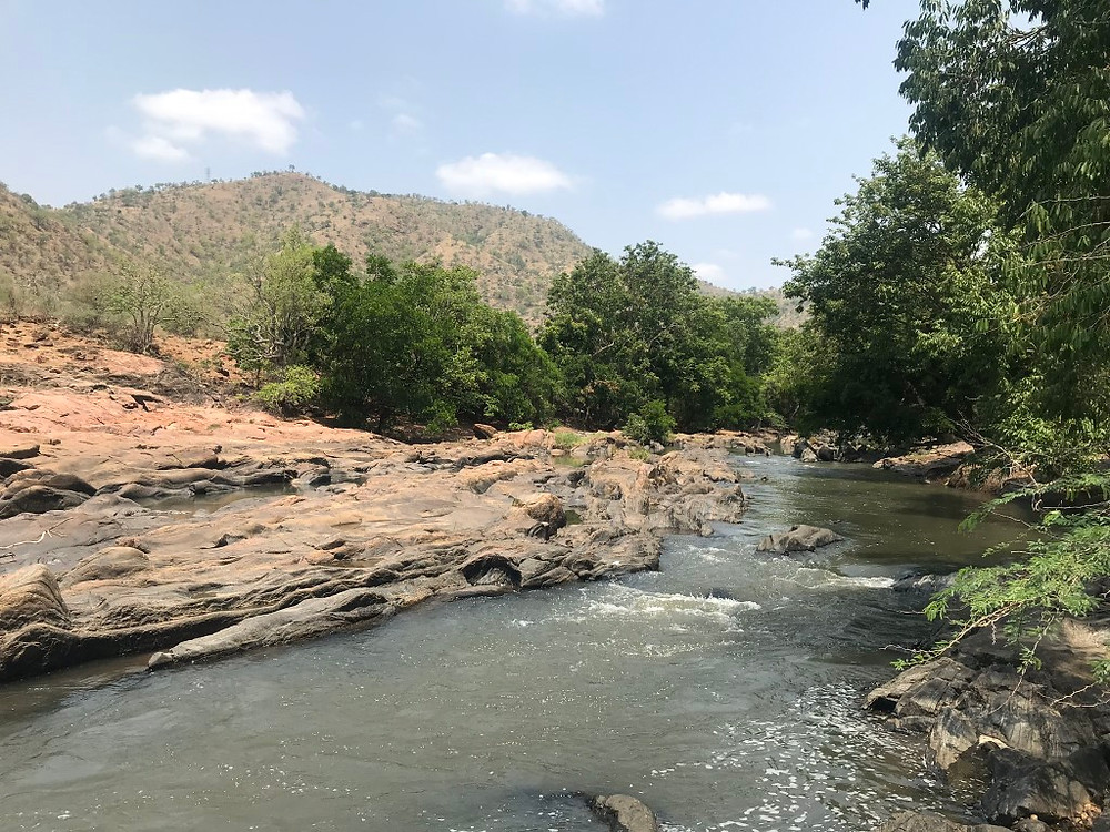 The Moyar River – home to the hump-backed mahseer. An unspoilt landscape protected by its inaccessibility deep within core tiger reserve.