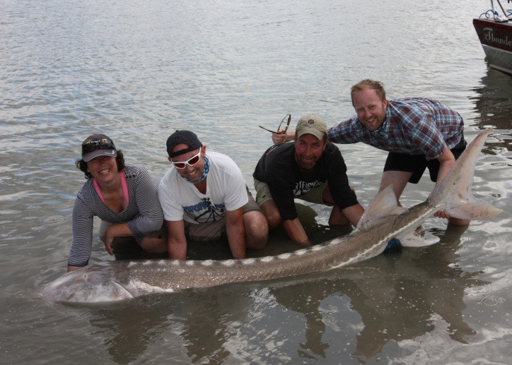 It wasn't all talk – Adrian and colleagues managed to catch this giant 300lb sturgeon, which was safely released back into the Fraser River
