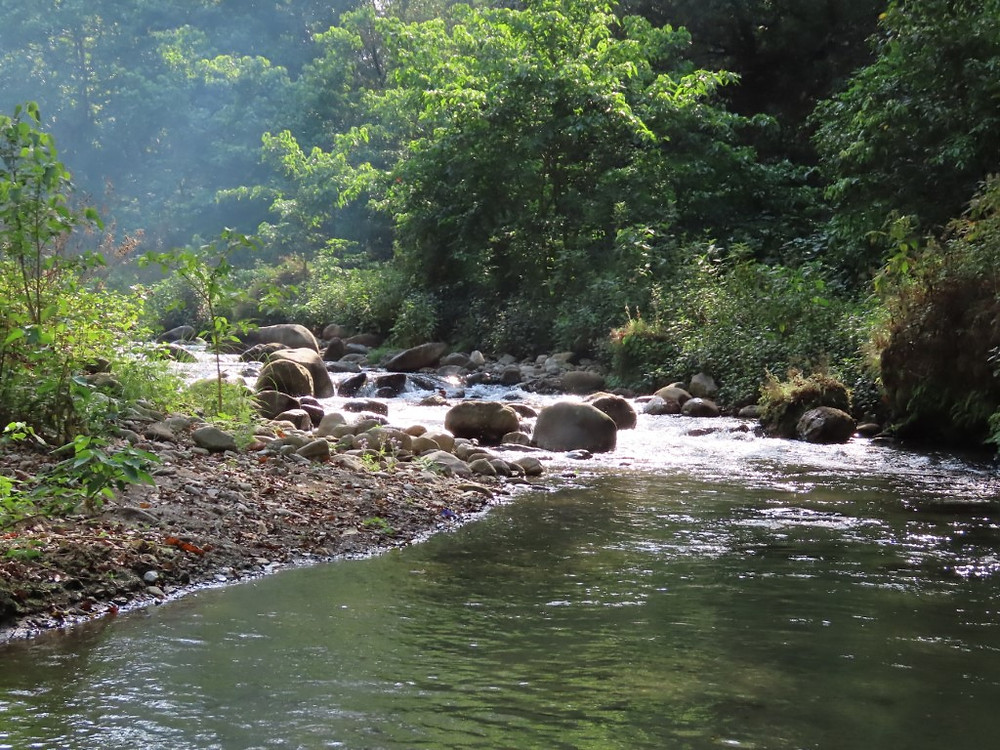 Ideal mahseer spawning and nursery habitat within a protected area, but without the mahseer