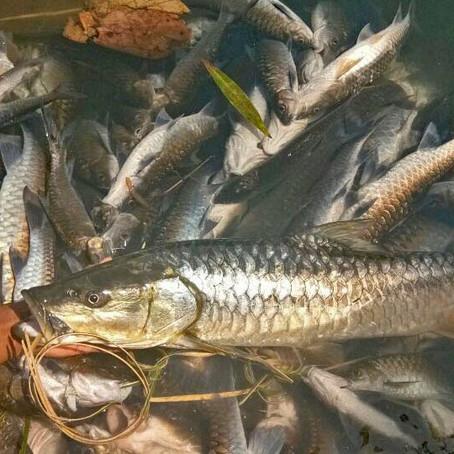 Garo Hills fish kills