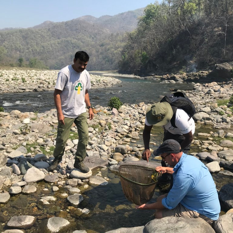 Searching for juvenile mahseer in shallow marginal bays and backwater pools