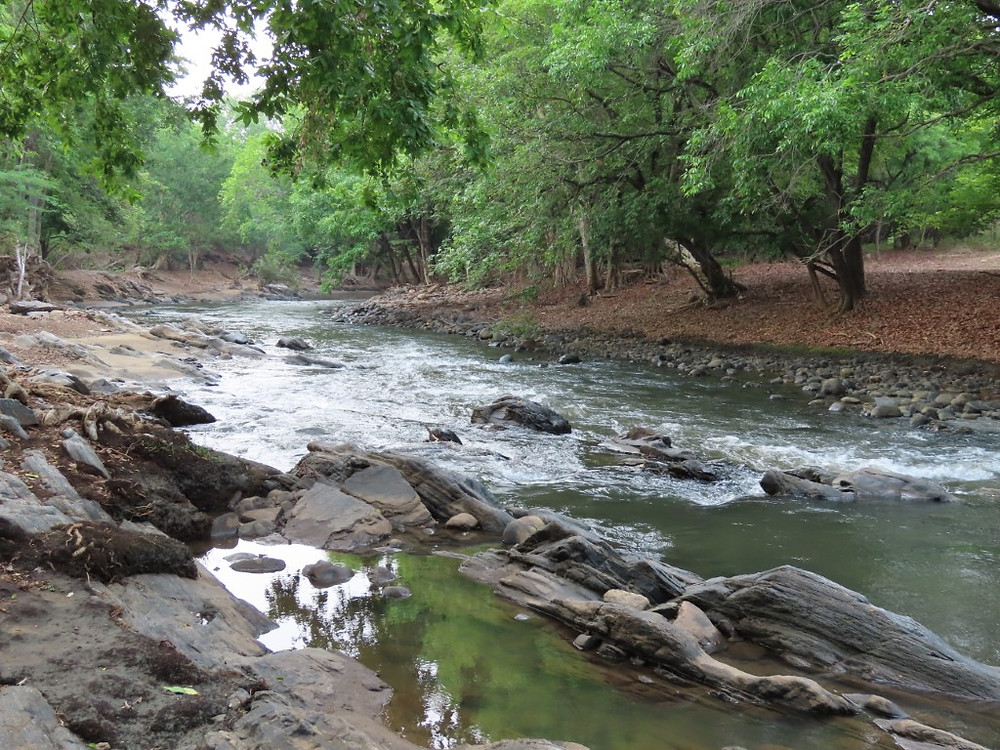 As we travelled the final section of track by jeep, we got our first tantalising glimpse of the Moyar River, home to one of the few remaining populations of hump-backed mahseer.