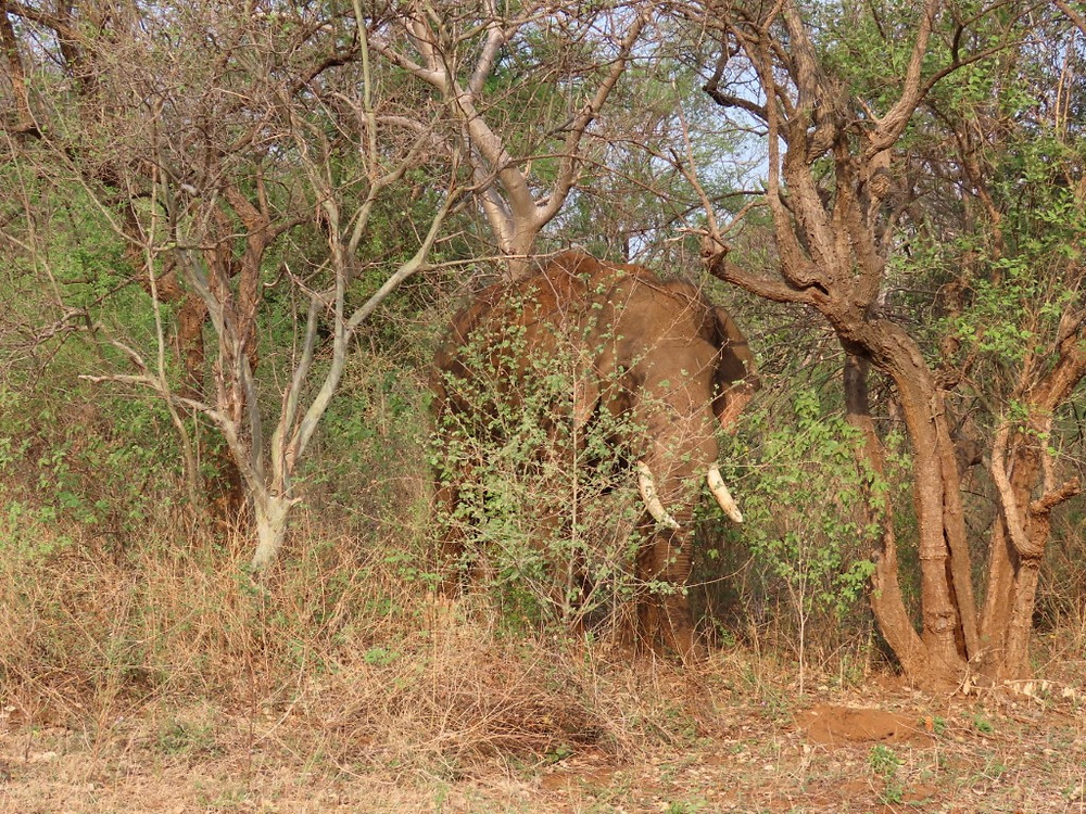 This bull elephant spotted during the expedition is one of a large population of elephants within the protected area.