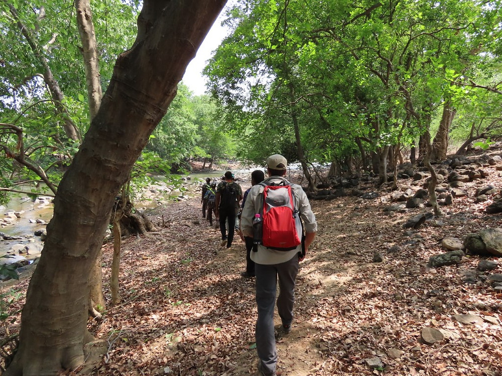 With the safe and expert guidance of the local Tamil Nadu Forest Department forest guards, we set off on foot to scope out the Moyar River.