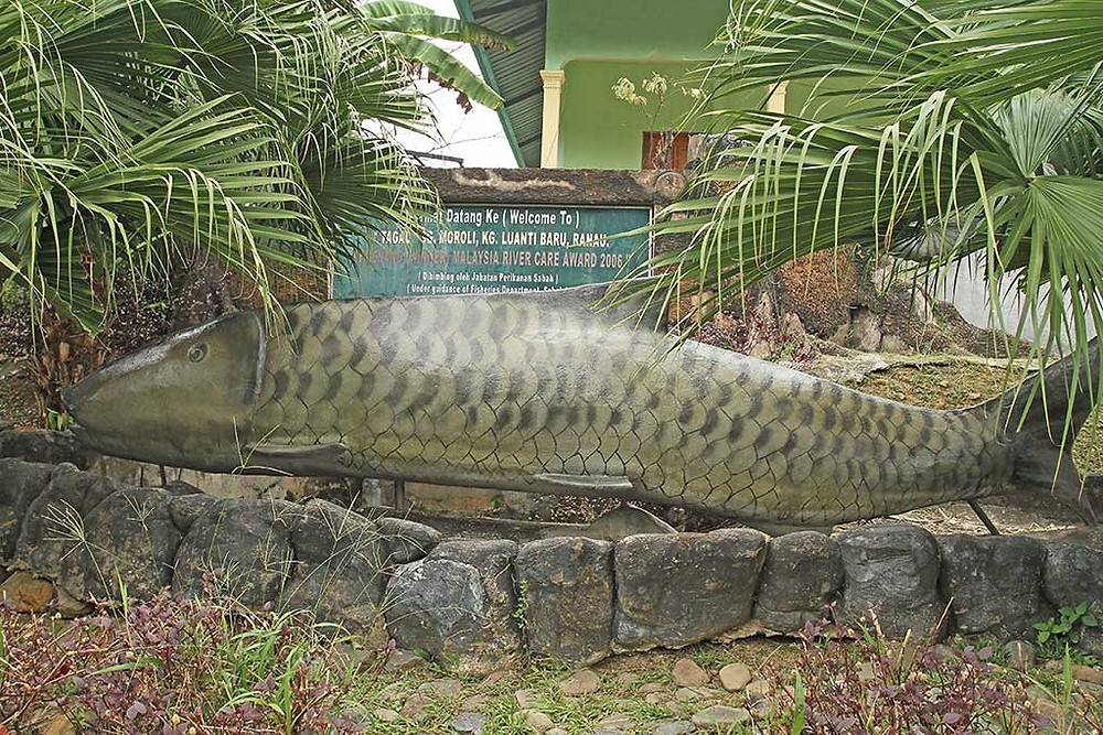 A large mahseer is both a welcome to the attraction, and a celebration of a Tourist Board award in 2006 for the innovation of this project at Kampung Luanti