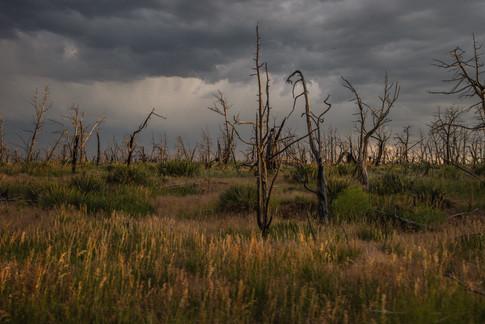 Colorado-3.jpg
