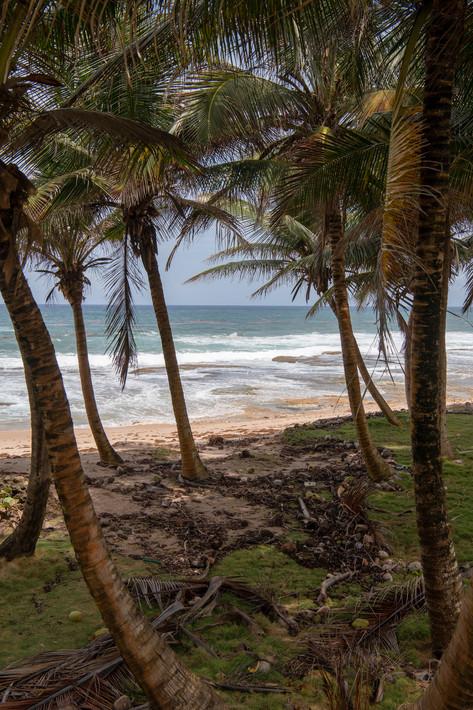 Barbados-5.jpg