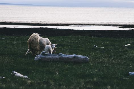 201804-Iceland-18.jpg