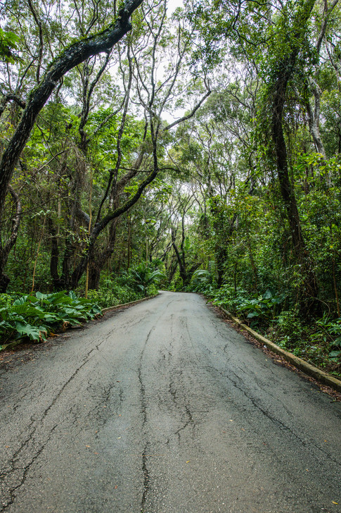Barbados-2.jpg
