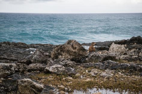 Barbados-1.jpg