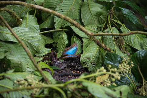 Costa Rica-13.jpg
