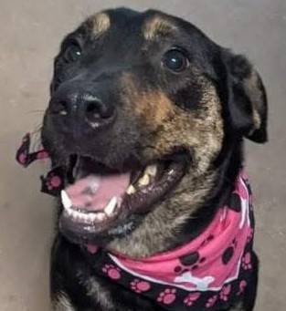 85 dogs, 98 cats up for adoption at Erath County Humane Society. Meet this week's featured pets.