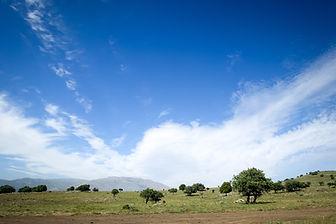 ido-miran-94233-unsplash blue sky trees.