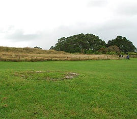 croppedimage560485-Grass-Kauri-Point.jpg