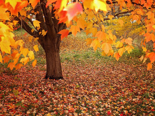 Is it important the Lawn Care in Fall ?