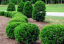 Pruning-Shrubs.jpg