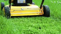 Lawn Care Tips during Fall