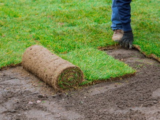 HOW TO PREPARE YOUR GROUND FOR SOD AND INSTALLATION PART 2