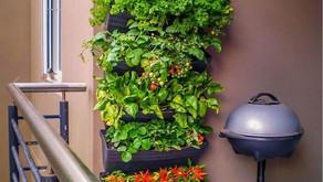 Advantages of having Vertical Garden 🎋💪