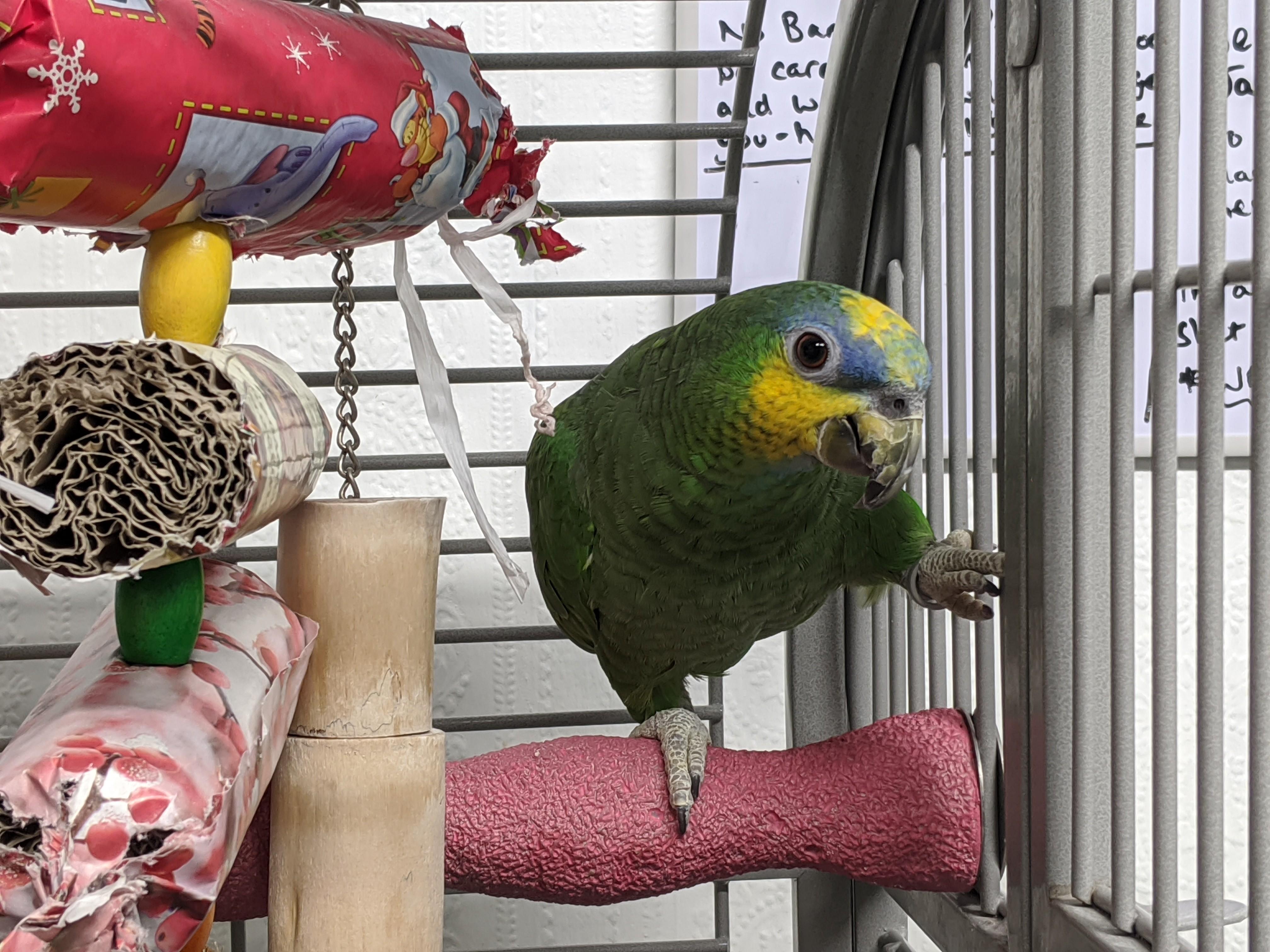Polly (OWA)