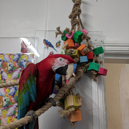 Parrot Toys in stock