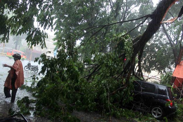 Pohon tumbang menimpa mobil Toyota Ist H-8889-LA dan satu korban luka ringan di Jalan Batan Selatan, tepatnya persimpangan Thamrin, Semarang, Indonesia, Kamis (3/11/2011).