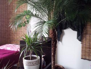 植物が増えました(^▽^)♪