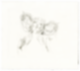Narcissus-BLarsonArt.png