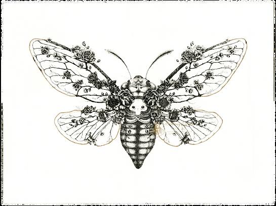 InsectaFLora-BLarsonArt.png