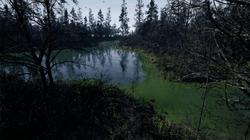 swamp8