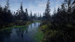 swamp9