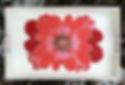 Red flower tray NWM.JPG