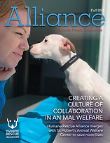 Alliance_Fall_2019_cover_options_touched